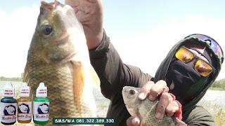 Essen Ikan Nila Babon Galatama