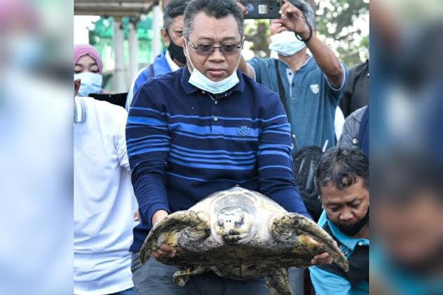 Gubernur NTB lepas penyu di Pantai Mapak Indah Mataram