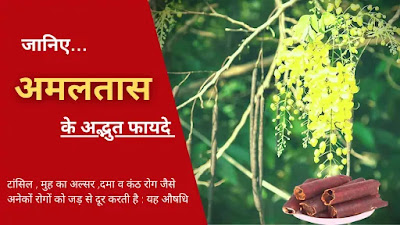 amaltas ke fayde in hindi