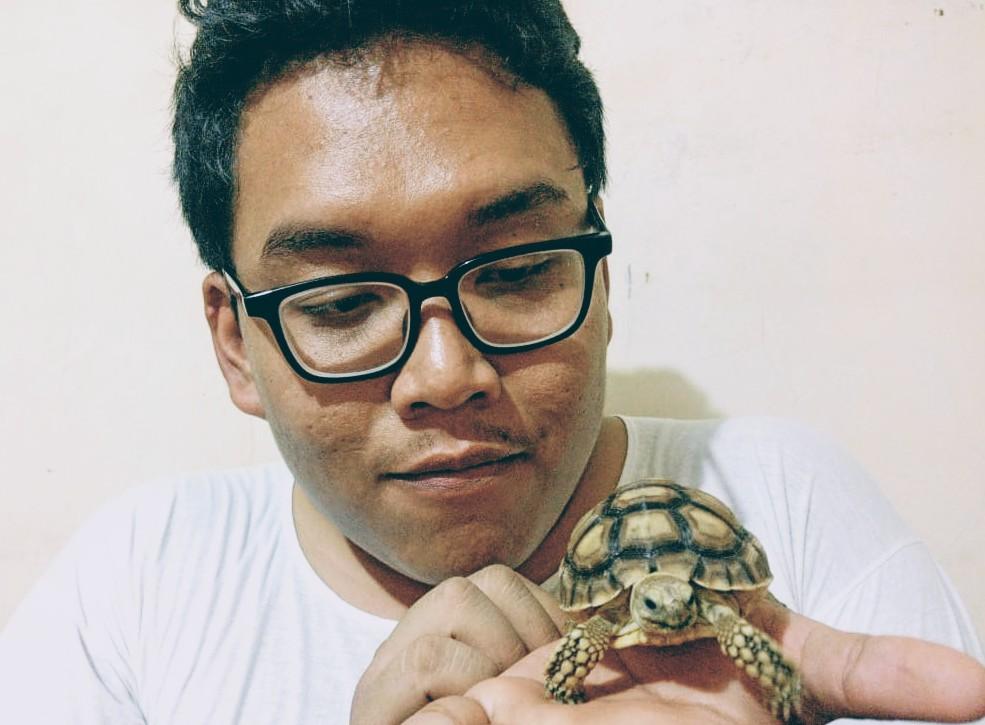 kura-kura sulcata dan tips memelihara agar cepat besar