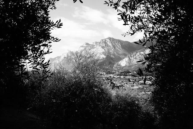 W gaju oliwnym. Czarno-biała fotografia krajobrazu. Arco, Włochy. fot. Łukasz Cyrus