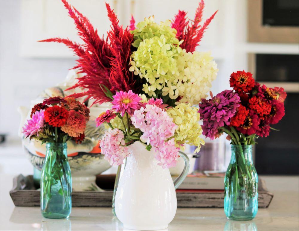 celosia-seeding-growing-tips-flower-garden-grower-athomewithjemma