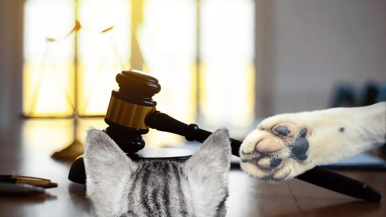 filtro de gato