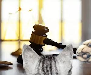 Abogado usa filtro de gato en pleno juicio