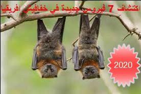 اكتشاف فيروس مشابه لكورونا من خفافيش افريقيا