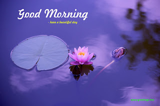 lotus good morning wishes image