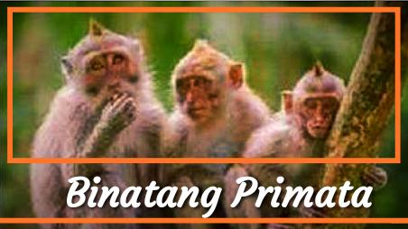 Gambar Monyet, Kera.