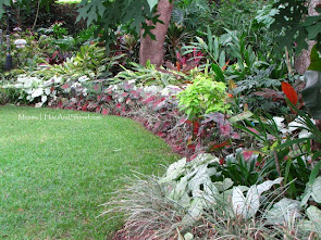 Partial Shade Plants for FL