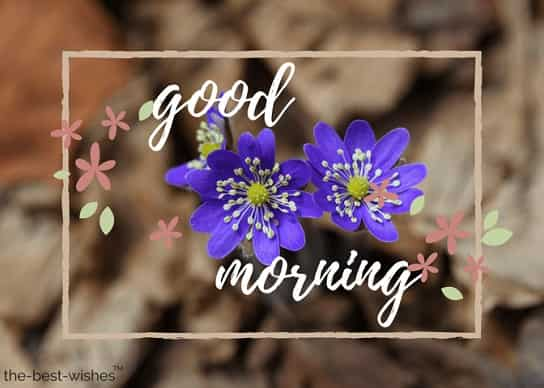 good morning with blue flower