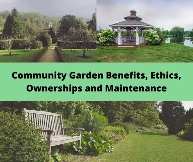 Community garden benefits