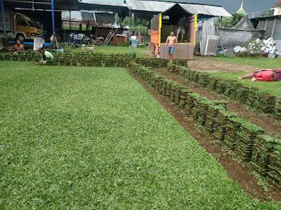 Tukang taman Surabaya Jasa Tanam Rumput Gajah Mini Surabaya