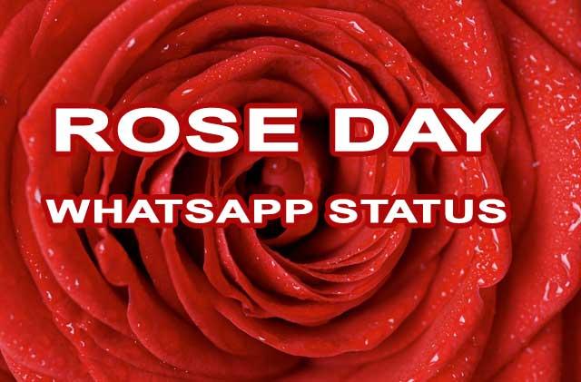 रोज़-डे-की-शुभकामनाएं-Happy-Rose-Day