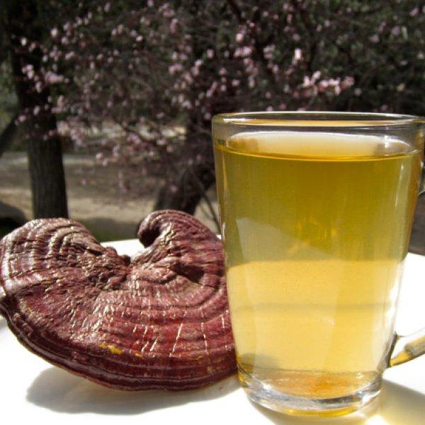 liều lượng uống nấm linh chi