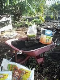 Harga Pupuk Sawit Nasa Untuk Lahan Gambut - 082135592065