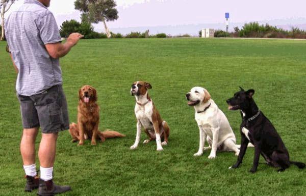 Dog Training Johnson City Tn