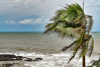 Sea side; palm trees ;struggling in storm