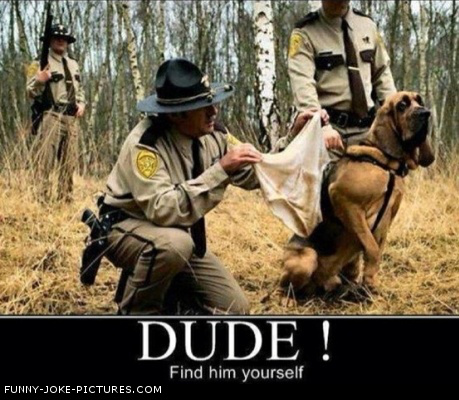 Funny Sniffer Hunting Underpants Dog Photo