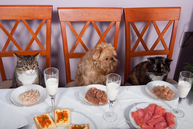 Πόσο σωστό είναι ο σκύλος και η γάτα να τρώνε από το ίδιο πιάτο