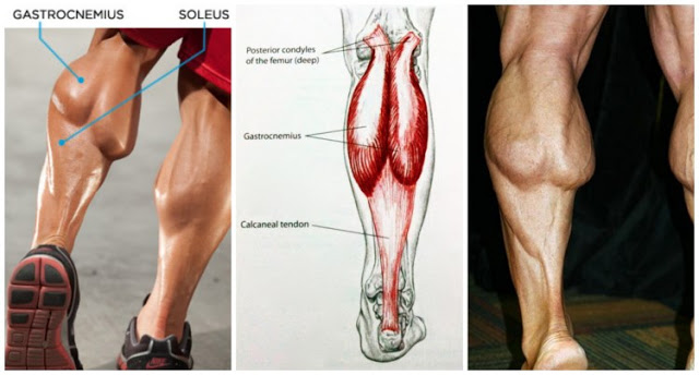 5 MISTAKES THAT ARE KEEPING YOUR CALVES SMALL !