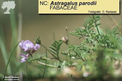 floraa de las sierras cordobesas