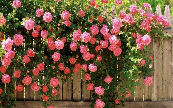 Những bông hoa rực rỡ sắc màu bên cạnh hàng rào hay chân rào thơ mộng