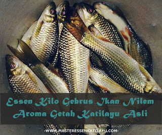 Essen Katilayu Ikan Nilem Kilo Gebrus