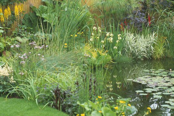 gradina de apa, plante iaz, pesti balta, lac, peisagistica, constructie, bazin pesti gradina