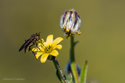 Close-Up Photography : Table Bay Nature Reserve, Woodbridge Island