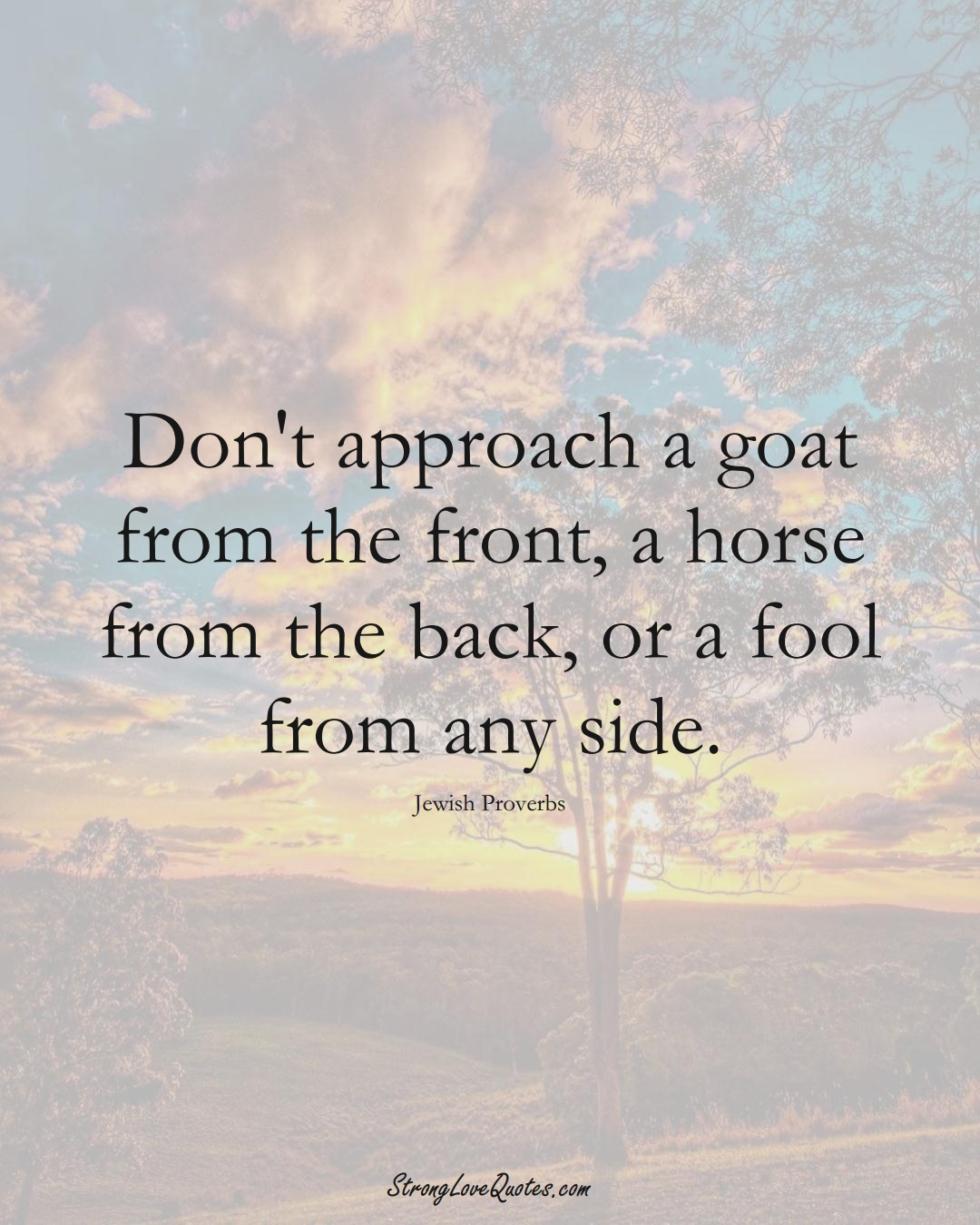 Don't approach a goat from the front, a horse from the back, or a fool from any side. (Jewish Sayings);  #aVarietyofCulturesSayings