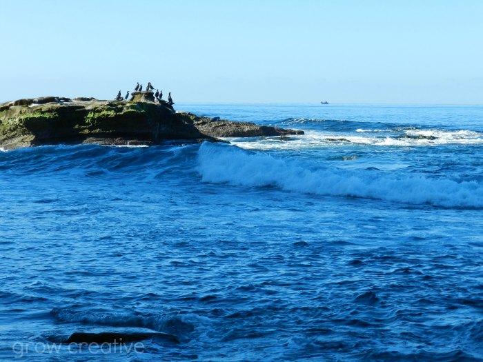 Ocean and Seagulls Photography: Grow Creative
