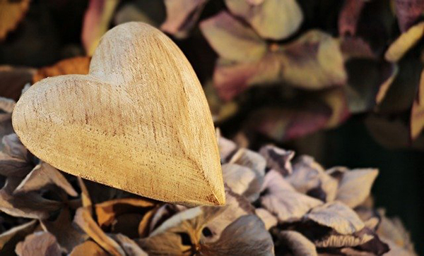 coração amor natureza