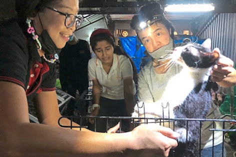 Over 300 cats rescued from a cat rescuer who abandoned them in cages in filthy conditions. Photo: Reuters.