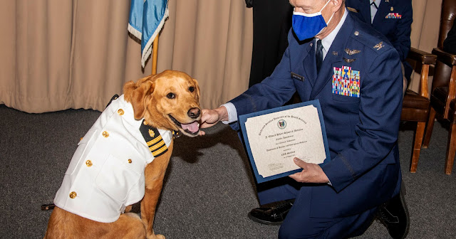 Shetland the dog receiving a certificate to recognize his promotion. A man leans over to Shetland, a golden retriever, to show off the certificate.
