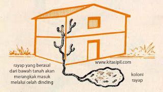 cara mencegah masuknya rayap ke dalam rumah