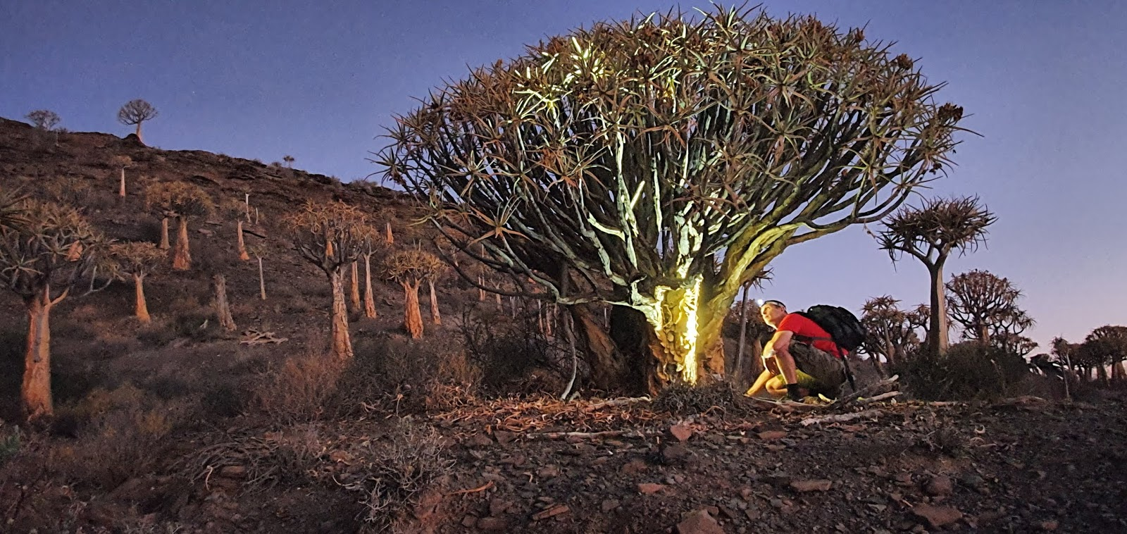 Gannabos, Quiver tree forest, Nieuwoudtville, Alex Aitkenhead, South Africa, Northern Cape, West Coast Flowers, Bulb Capital of the world, Aloe Dichotoma, Star Trails, Celestial Photography, African sunset, African Desert, Star Photography,