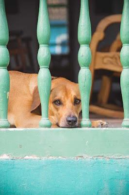 Dog name in hindi