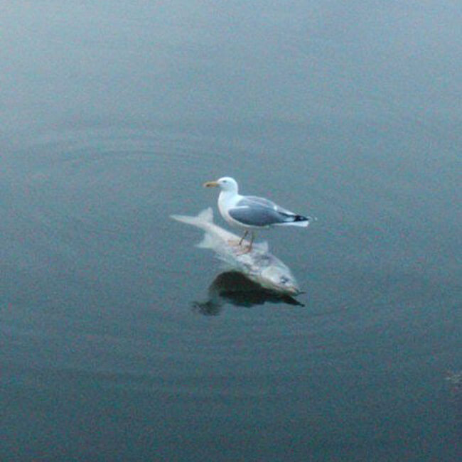 27 Pictures Show That The World Has A Plan For All Of Us - The seagull is resting after fishing. Keep scrolling.