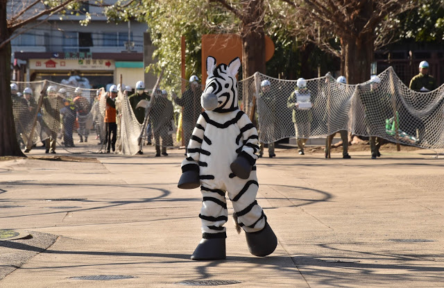 Emergency drill at Tokyo's Ueno Zoo, 2016. Zoo employee dressed up as a plush zebra walking around the zoo grounds while a line of zoo employees come up from behind with a portable containment net. The Zoo Houdinis and other stories. marchmatron.com