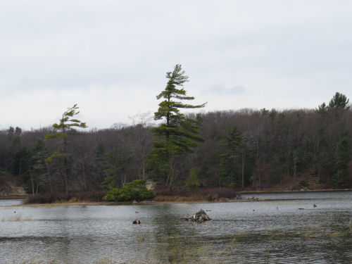 lone evergreen tree on an island