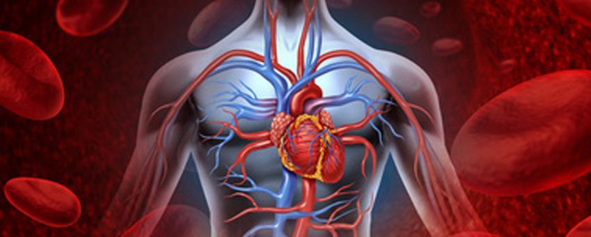 kortyzol i wypływ na organizm, kortyzol i zdrowie