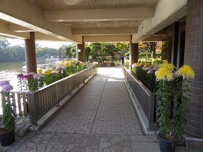 市民の森(鏡伝池緑地)ひらかた菊花展