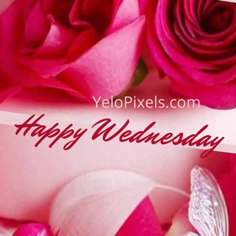 Beautiful-image-with-red-rose-that-make-your-mode-fresh-at-Wednesday