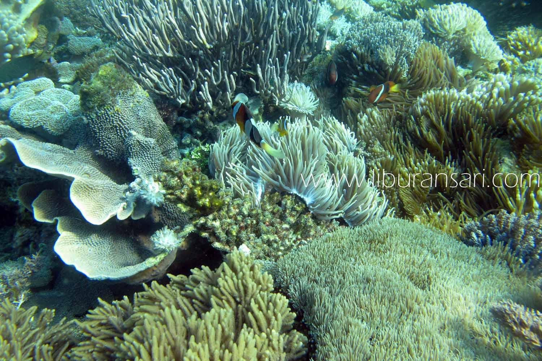 Bertemu Ikan Nemo Di Pantai Pink Flores Beyond Vacation