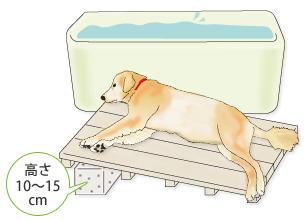 banho em cães doentes