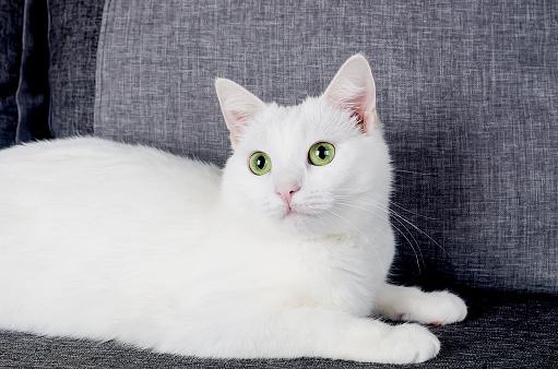 8 Resep Makanan Kucing Yang Bernutrisi dan Mudah Dibuat Dirumah