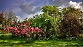 حديقة الفردوس