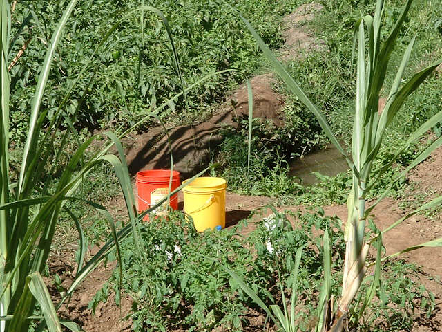 Cultivation of Vegetables near Springs in Lushoto