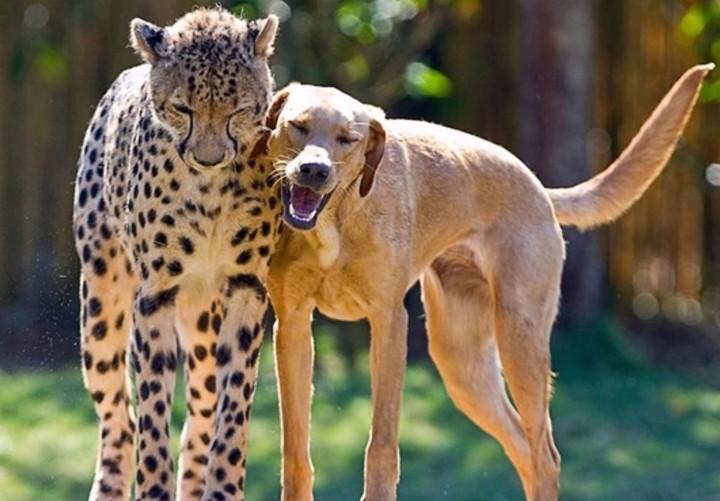 As fotos de animais fofos que mostram a amizade dos animais