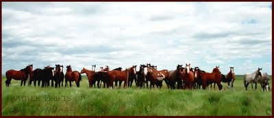 Long line of horses, north of Val Marie, Saskatchewan - photo by Shelley Banks
