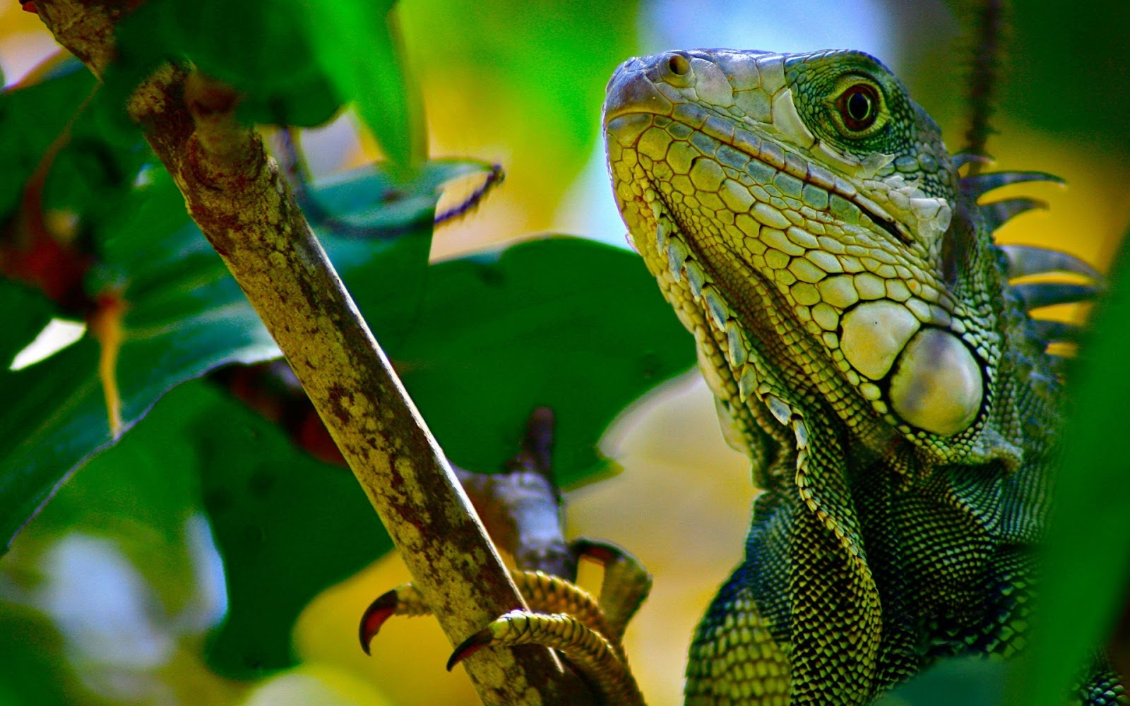 22 reptile hd wallpapers - photo #2